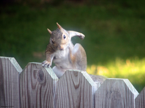 Strong Squirrel