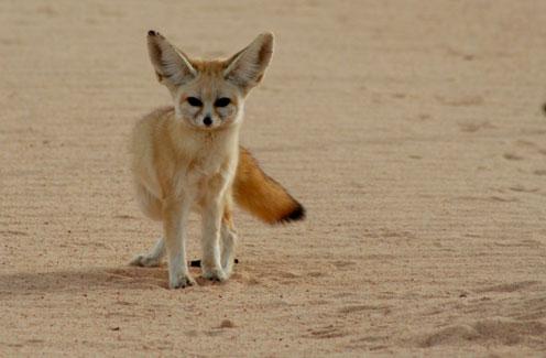 Biome #1 Desert Saharan Desert