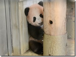 panda03