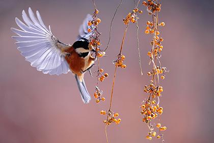 bird-Nuts-thum