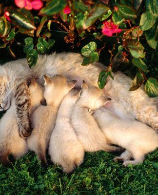 Mamma gatta e i suoi gattini