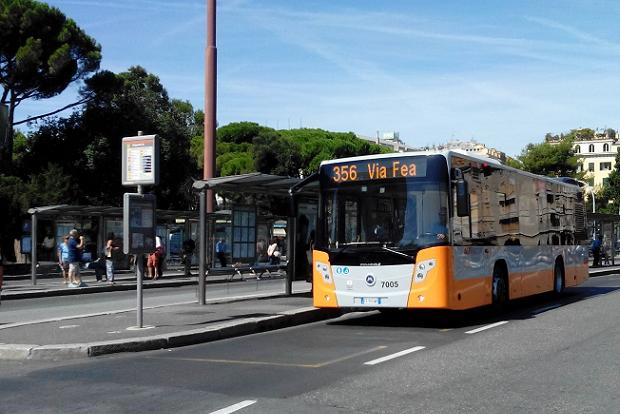 Linea 356 bus nuovi