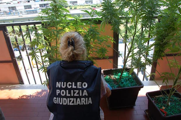 nonna marijuana
