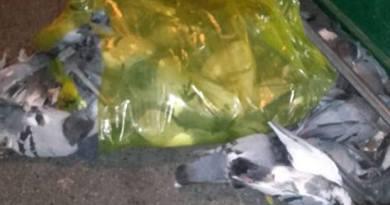 Decine di piccioni morti abbandonati vicino a un cassonetto. Giallo a Molassana