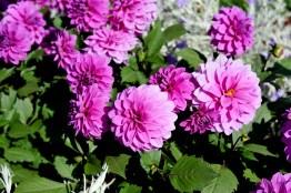fiori (20)