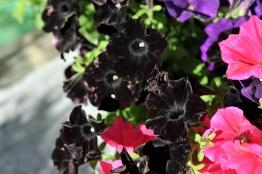 fiori (32)