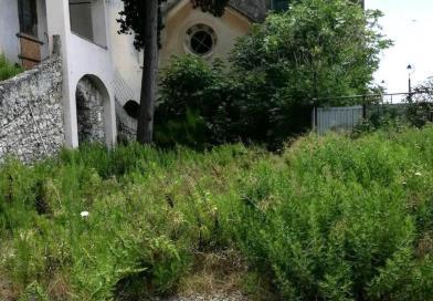 Giungla a San Giuliano, erbacce e arbusti sotto la futura Casa dei Cantautori