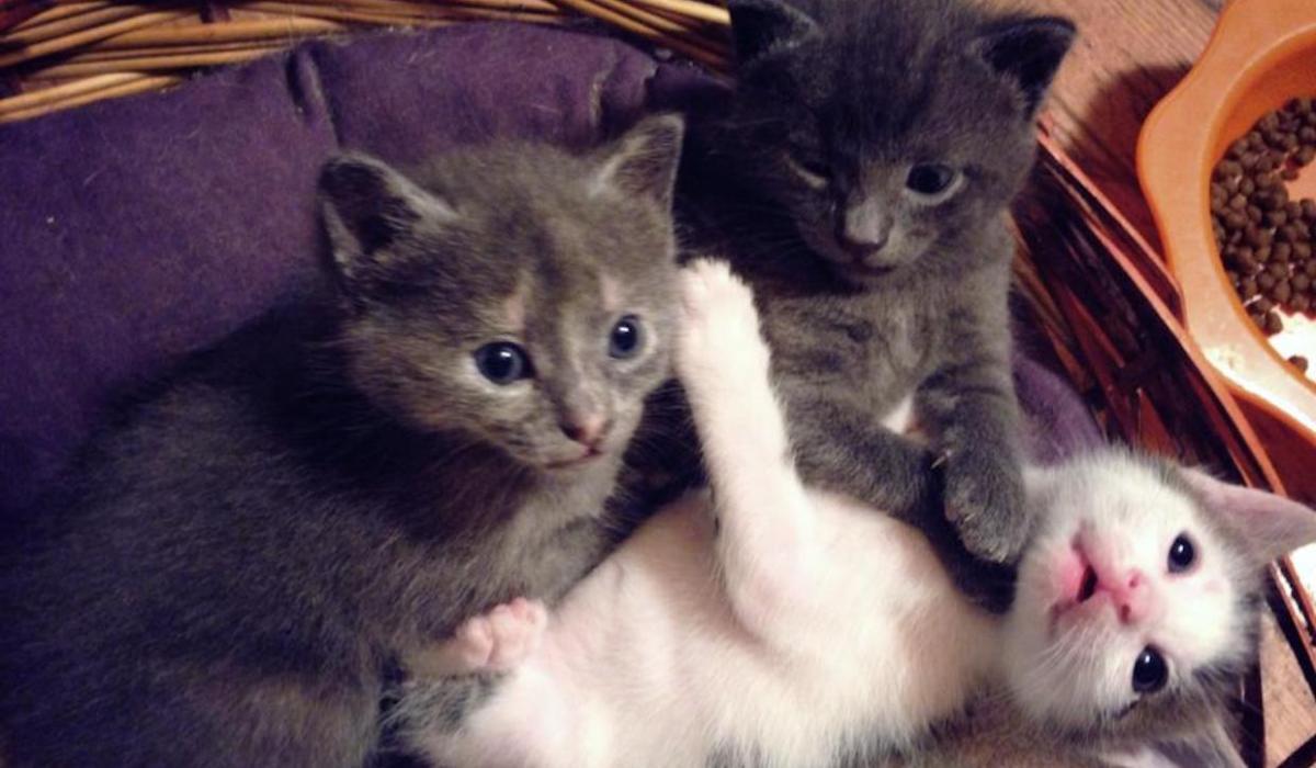 Le vostre foto per la Festa nazionale del gatto. Storie di felini genovesi