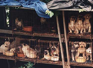 """Author Weese, Scott """"Puppy Seizure on Vancouver Island"""" Werms and Germs Blog. Published 12 July 2011. Online Article image."""