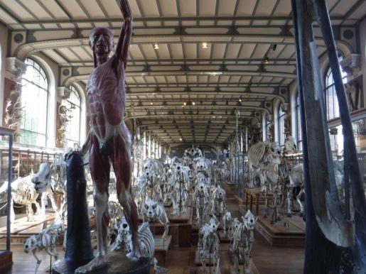 PG.Paris.Natural History Museum003