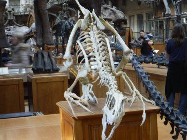 PG.Paris.Natural History Museum011