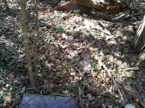 This is how close the WWT footstone is to the headstone of William H. Thompson. Both are fairly new.