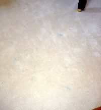 How To Quickly Address Carpet Stains from Pens | Gentle Clean