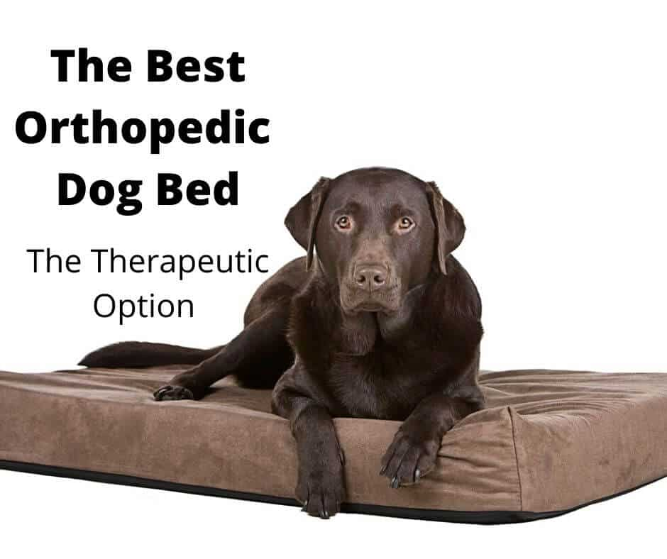 9 best orthopedic dog bed options