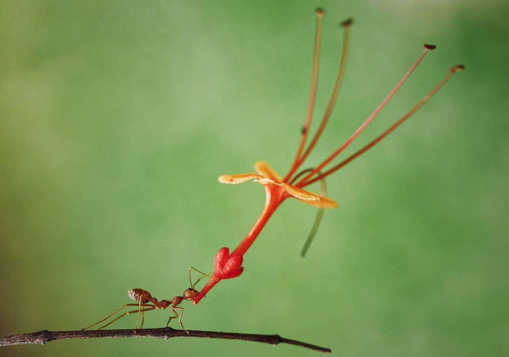 """Strong Ant"" autor Muhammad Faishol"