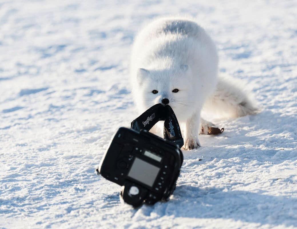 """""""A Camera Steal"""" autor Michou von Beschwitz"""