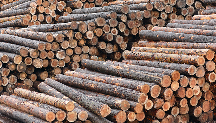 """Does Dad """"saw logs"""" all night?"""
