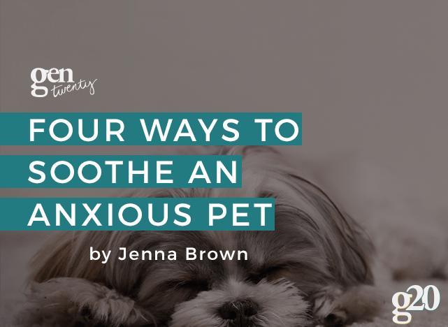 soothe an anxious pet