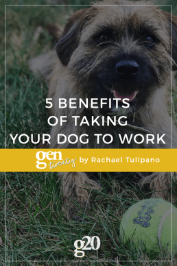 5 Benefits of Taking Your Dog to Work