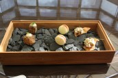 Canapes - Haggis fritter; Goat Cheese Macaroon; Salmon Mousse Cracker