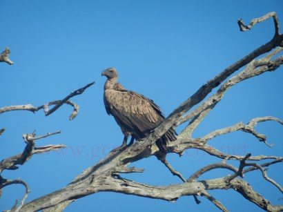 Kruger-Nationalpark_10