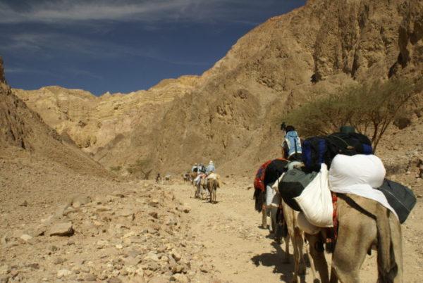 Photo of Camel Caravan