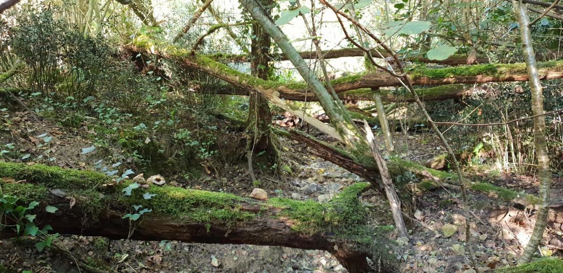 geode-quartz-calcedoine-trouver-chercher-landes-foret-ruisseau-bois
