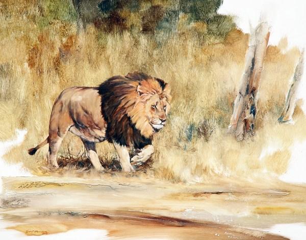 Lion Geoff Hunter Wildlife Art