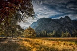Golden-meadow