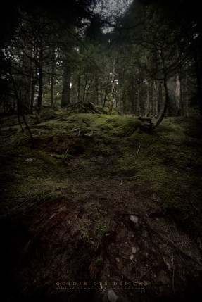 Forrest-contrast