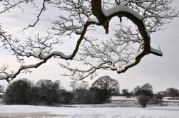 Icy ponds
