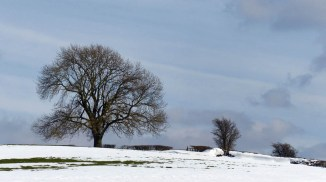 Tree and drifts