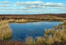 Large pool and distant Wrekin