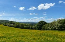 Buttercups and distant hills
