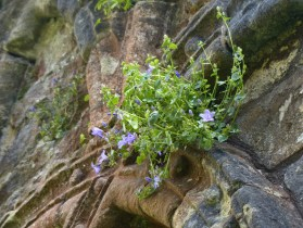 Growing on the walls