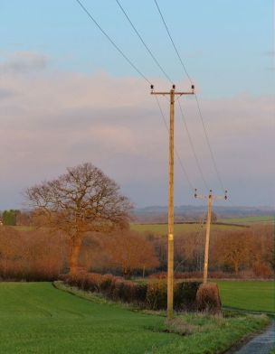 Eastern sky - tree and poles