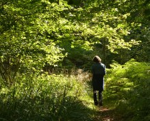 In Bannister's Coppice