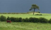 Borderland tree