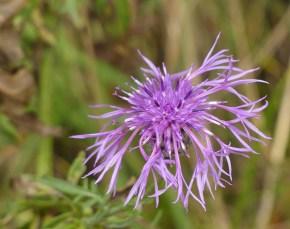 Feral flower?