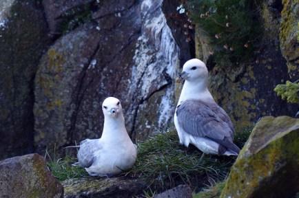 Gulls on the rocks