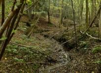 Woodland watercourse