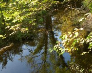 Sheinton Brook 1