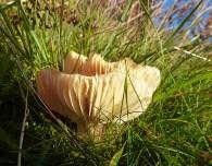 A fine fungus