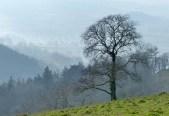 Misty vale