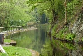 A green scene