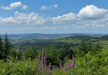 Foxgloves and Welsh hills: High Vinnals view