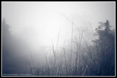 Grass in the mist