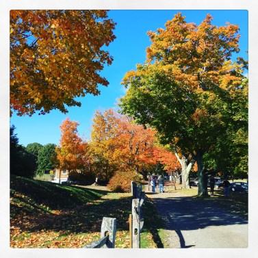 2016-10-15-apple-picking-3