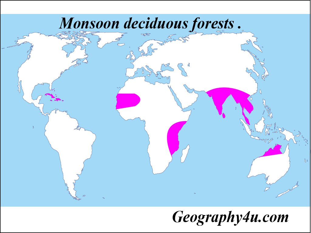 Coniferous forests, broadleaved forests, evergreen forests, wet evergreen, deciduous forests, and mangrove forests are some main types of forests found in india. Deciduous Forests Characteristics Plants And Animals Geography4u Com