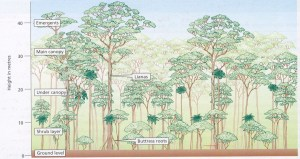 1000 images about REF Tropical Rainforest on Pinterest